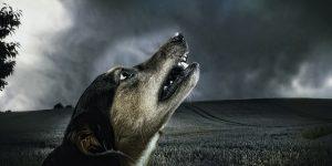 retrouver chien égaré
