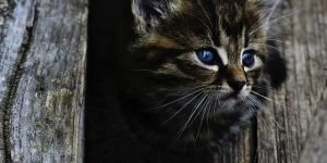 Comment retrouver son chat quand on l'a perdu ?